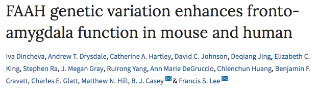 FAAH genetic variation enhances fronto-amygdala function in mouse and human